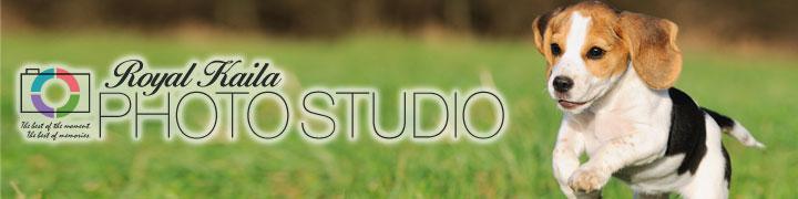 東京・横浜でのペット写真撮影『ロイヤルカイラフォトスタジオ』